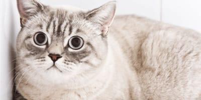 7 soluzioni per rassicurare un gatto spaventato