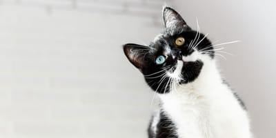 Día Internacional del Gato 2021: 20 curiosidades desconocidas sobre los gatos
