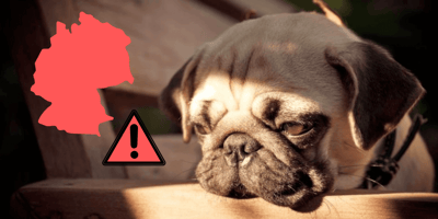 Klein aber bedrohlich: Der Fuchsbandwurm beim Hund
