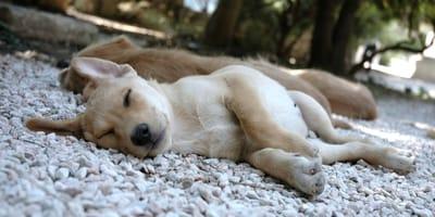 Was sind eigentlich Mittelmeerkrankheiten beim Hund?