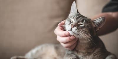 Día Internacional del Gato: fechas, origen y significado