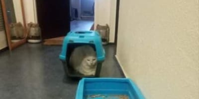 Znajduje kota sąsiada na klatce schodowej. To, co z nim zrobił jeży włos na głowie