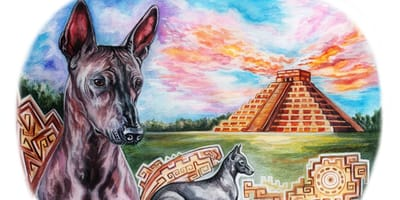 Historia del xoloitzcuintle: ¡un perro de leyenda!