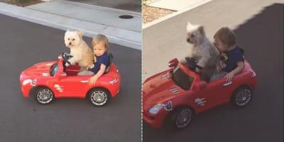perro automóvil bebé