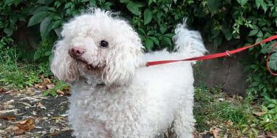 To, do czego posunęła się ta mieszkanka Gliwic, aby pozbyć się psa, jest niewiarygodne