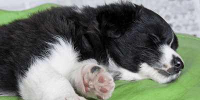 Couple takes puppy home: Two days later, they're forced to make a tragic decision