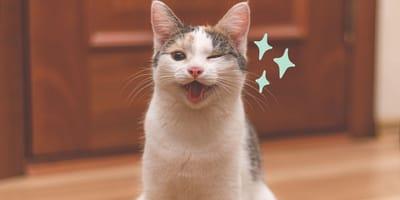 ¿Qué significa que un gato te guiñe el ojo?
