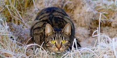 Will meine Katze mich töten? Wissenschaftler wissen es!