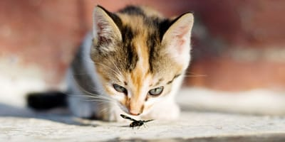 Can cats eat bugs?