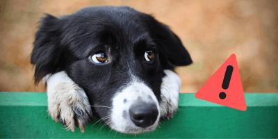 ¿Qué hacer si mi perro tiene hipo?