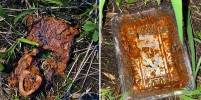 Levensgevaarlijk slakkengif vlakbij speeltuin in Mechelen