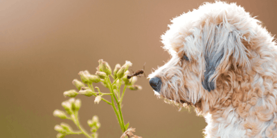 What happens if a dog eats an insect?