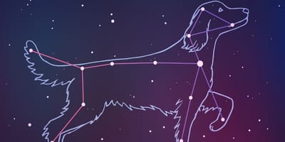 Your dog's zodiac sign: What does it say about them?