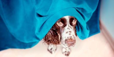 5 consigli per il cane che ha paura dei fuochi d'artificio