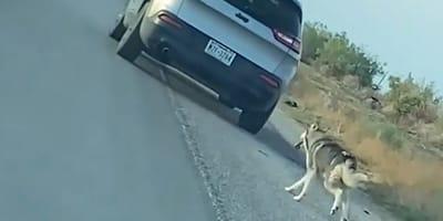 Mężczyzna wypuszcza z auta psa na pustej drodze i odjeżdża. To rozdzierające nagranie obiegło świat