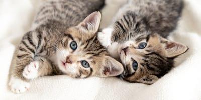¿Qué significa soñar con gatos?