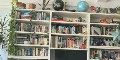 ¿Puedes encontrar al gato en el librero en menos de 10 segundos?