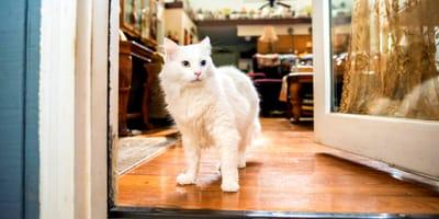 5 modi per evitare che il gatto scappi di casa