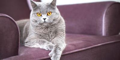 5 cose da aspettarsi da un gatto appena adottato