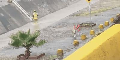 Cane in un fiume con pompieri