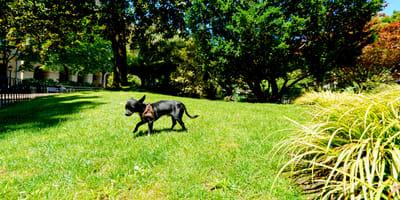 Ecco cosa fare se hai un cane che scappa