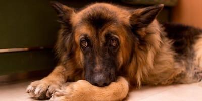 Lascia il cane in una pensione: la situazione due settimane dopo
