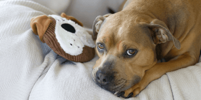 Man risks going to jail in order to save Pitbull's life