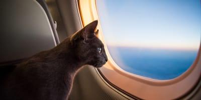 Aerolínea colombiana no reconoce a los gatos como mascotas de soporte emocional