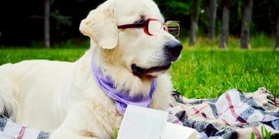 Come funziona la memoria del cane?