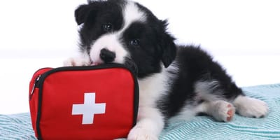 First aid for dogs: Every second counts