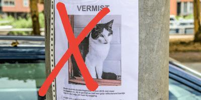 Posters plakken om je vermiste huisdier terug te vinden: mag dat?