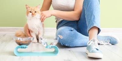 Jak zachęcić kota do picia wody? 9 sprawdzonych sposobów