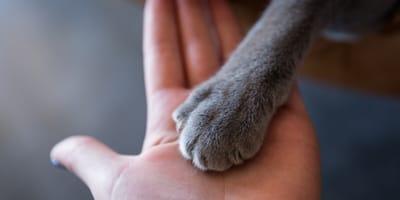 Halter beerdigt tote Katze: Als er später ein Miauen hört, fällt er aus allen Wolken!