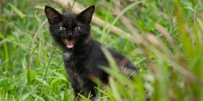 Kobieta zauważa, że jej kot zachowuje się dziwnie. Kiedy odkrywa przyczynę, jest przerażona