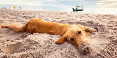 ¿Qué pasa si un perro come arena de playa?