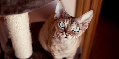 Albero tiragraffi: conosci i tipi di palestra per gatti?