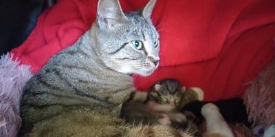 Tierschützer aus NRW finden Katze: Ein Detail lässt sie überkochen vor Wut!