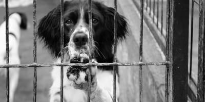 ¿Cuál es la situación respecto al maltrato animal en México?