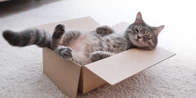 Jak zrobić domek z kartonu dla kota?