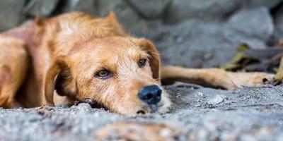 Le foto della rinascita degli animali abbandonati