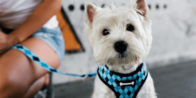 How to pick the perfect dog harness for your pet