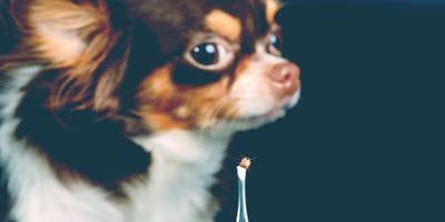 In cosa consiste la malattia di Lyme nel cane?