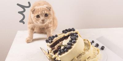 Punire il gatto: buona o cattiva idea?
