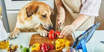 Welke groenten mag een hond eten?