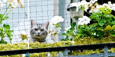 Hai un balcone? Prendi la rete di protezione per gatti