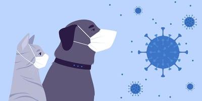 Covid-19 en mascotas: síntomas, tratamiento, detección y contagio