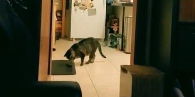 Stary Playboy, uszczelka, żarówka: podarunki, które ten kot przynosi opiekunowi są niewiarygodne!
