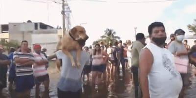 perro-rescatado-tabasco