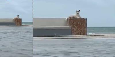 Perro en altamar