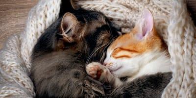 6 cose che devi sapere sulla riproduzione dei gatti